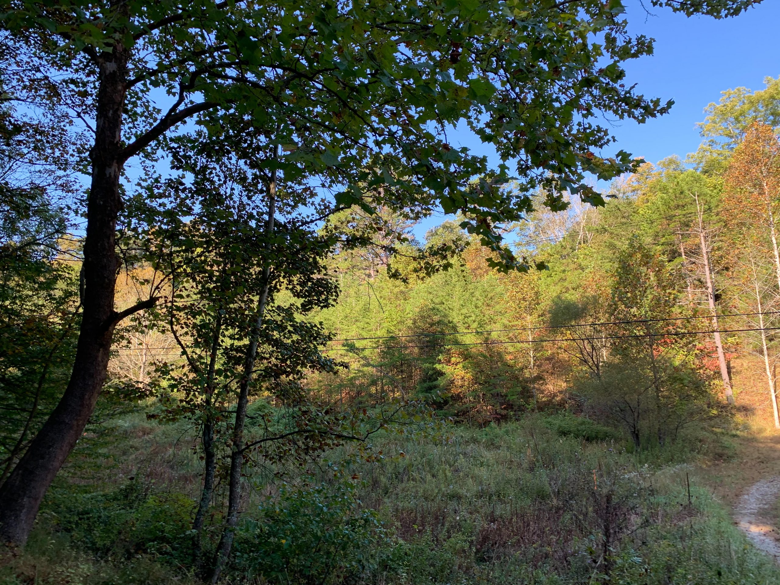 Lee Co. – Grey's Bend Area
